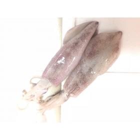 Squid (Grade A) | Sotong (3pcs± /Kg)